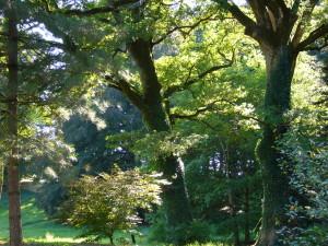 Arboretum Neuvi © D'Ussel