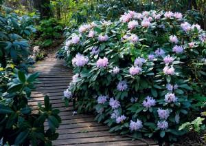 Dennenlohe rhododendronpark