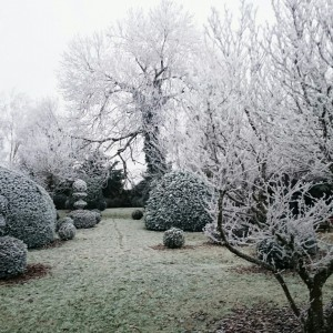Buxus en hiver; ©Patrick  Salembier